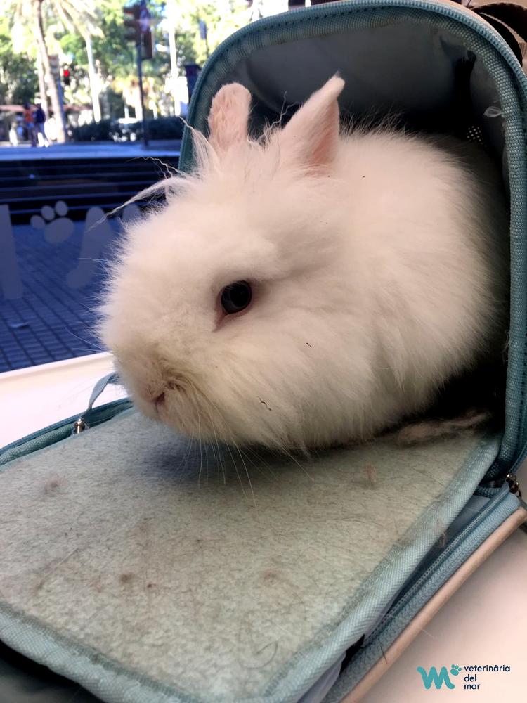 conill-esterilitzacio