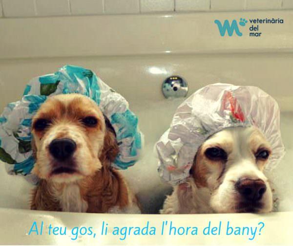 banyar-el-gos-consells