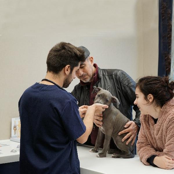 Estornudos y tos en perros: El caso de la American Staffordshire Noa