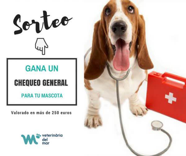 Sorteig especial a la nostra pàgina de Facebook: Guanya una revisió per a la teva mascota valorat en més de 250 €