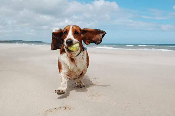 Mapa de platges per gossos